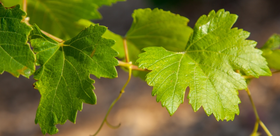 Wines and Brands and the sustainable development