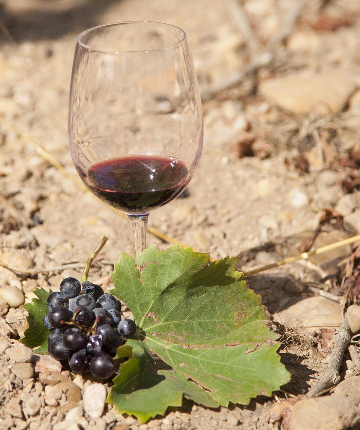 vin-rouge-verre